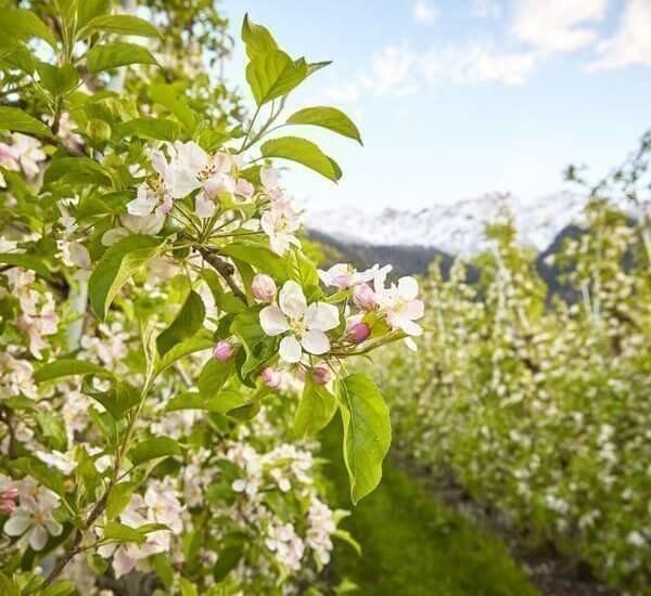 urlaub-auf-dem-bauernhof-vinschgau-(1)