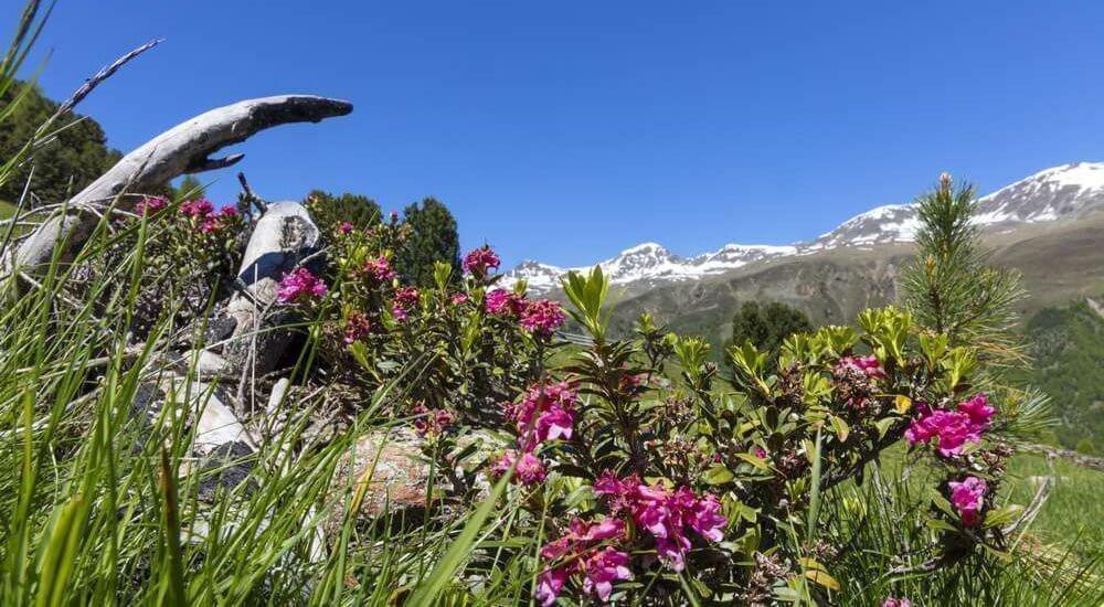 Waalhof Coldrano - Alto Adige 27
