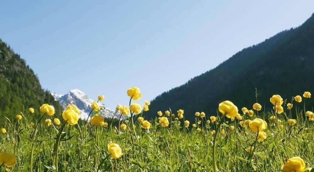 Waalhof Coldrano - Alto Adige 29